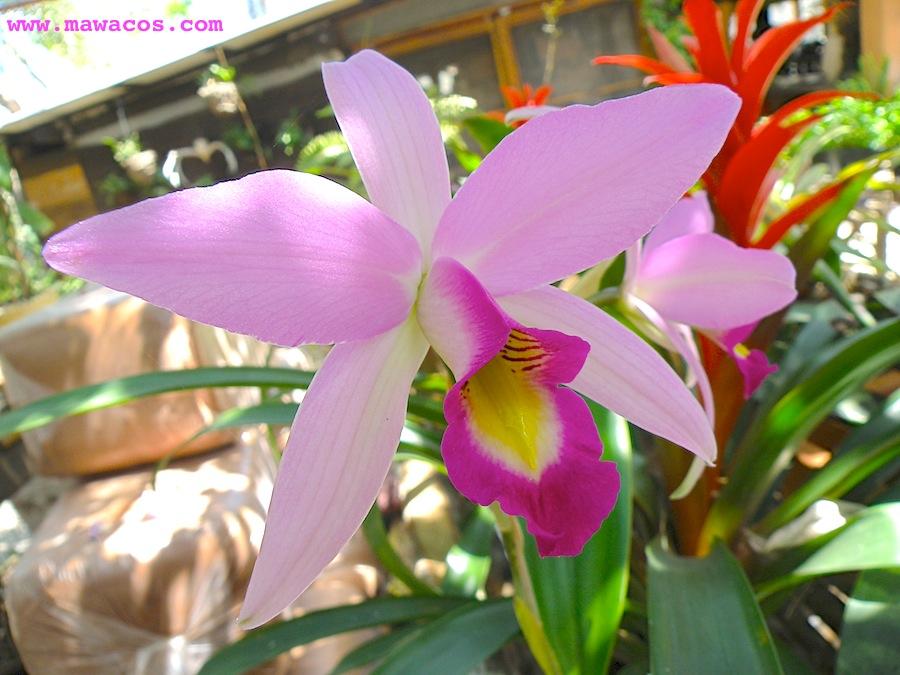 raras, la verdad es que las orquídeas representan una de las familias de seres vivos más exitosas del planetas. Hay más tipos de orquídeas